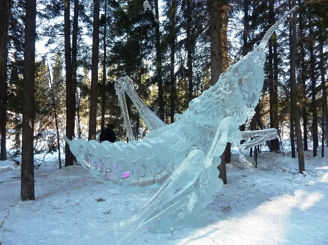 ice_insect1a