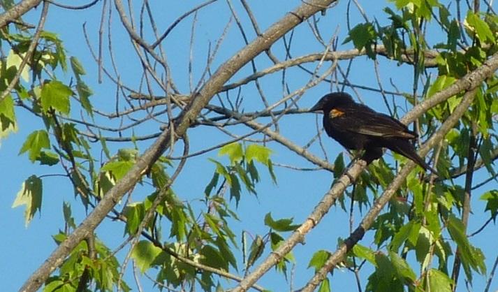 BIRDS_UP