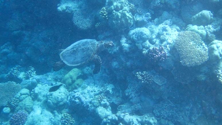 lynn_turtle