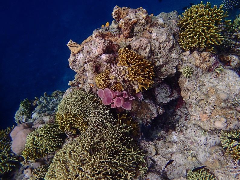 strike_coral1